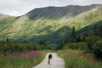 Lael Wilcox '08 biking in Alaska