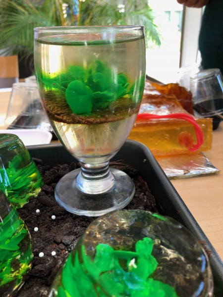 """In 2018 the lab studied jello art and created a tray full of pretty Arabidopsis jellows, which won us, along with a candy gel box, and a licorice DNA molecule, the """"most creative"""" award that year."""