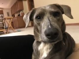 Alexa's dog, Tobi-ko