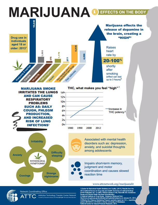 Effects of marijuana on the body infographic