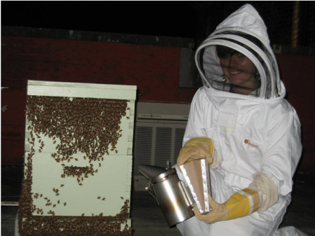 Our lab studies both honeybees (Apis mellifera) and the western yellow faced bumblebee (Bombus vosnesenskii), which is native to Washington State. This photo show a research student in full beekeeping gear working with a hive of Apis mellifera honeybees.