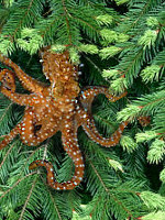 Pacific Northwest Tree Octopus, courtesy zapatopi.net